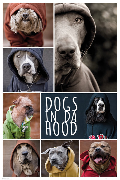 Dogs in da Hood Maxi Poster